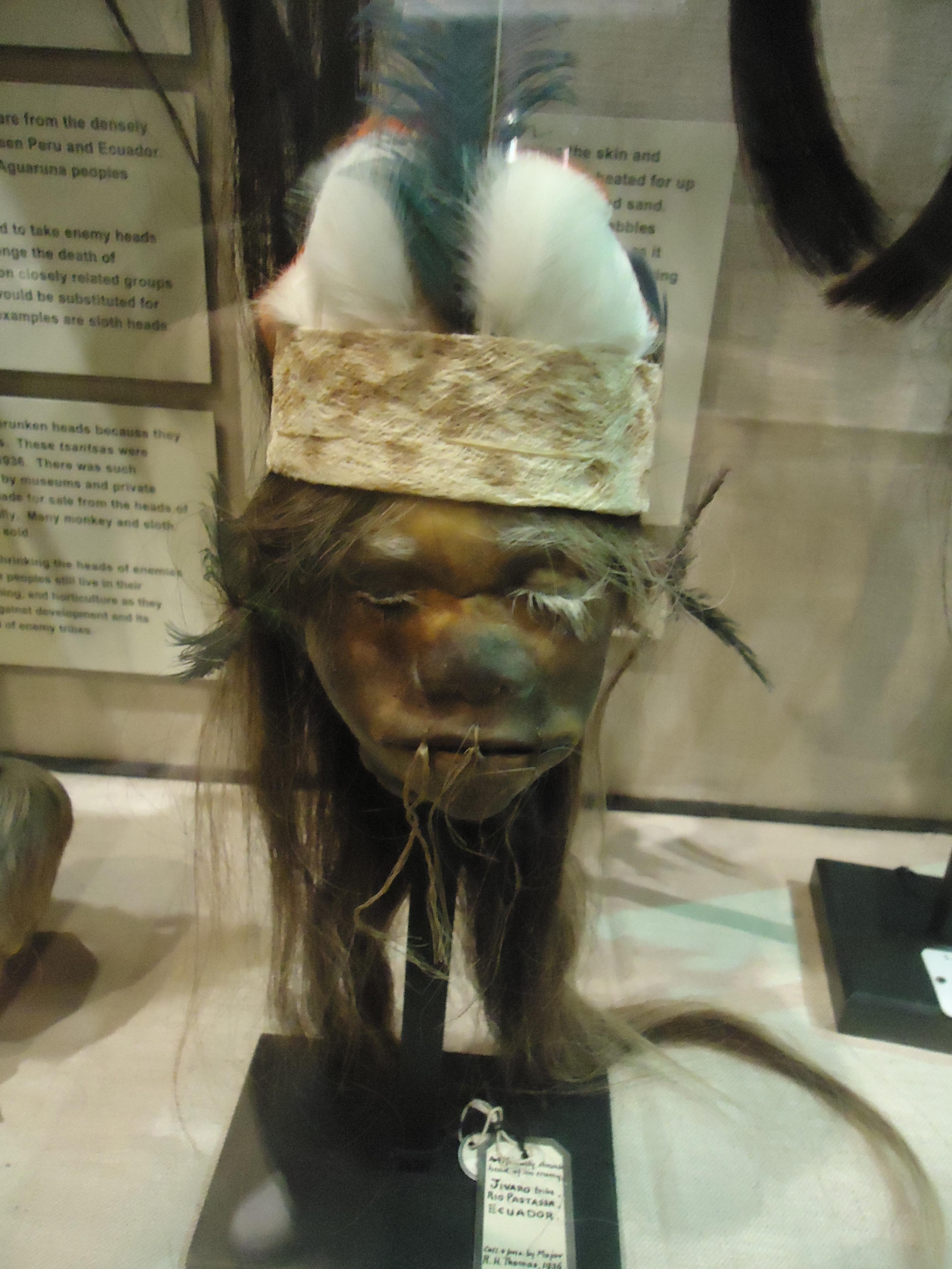 pitt rivers museum snapshots