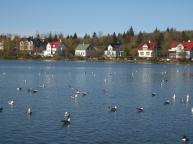 Lakeside in Reykjavik