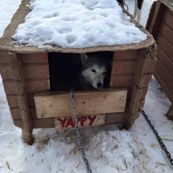 Dog Sleep Indoors House Or Bed